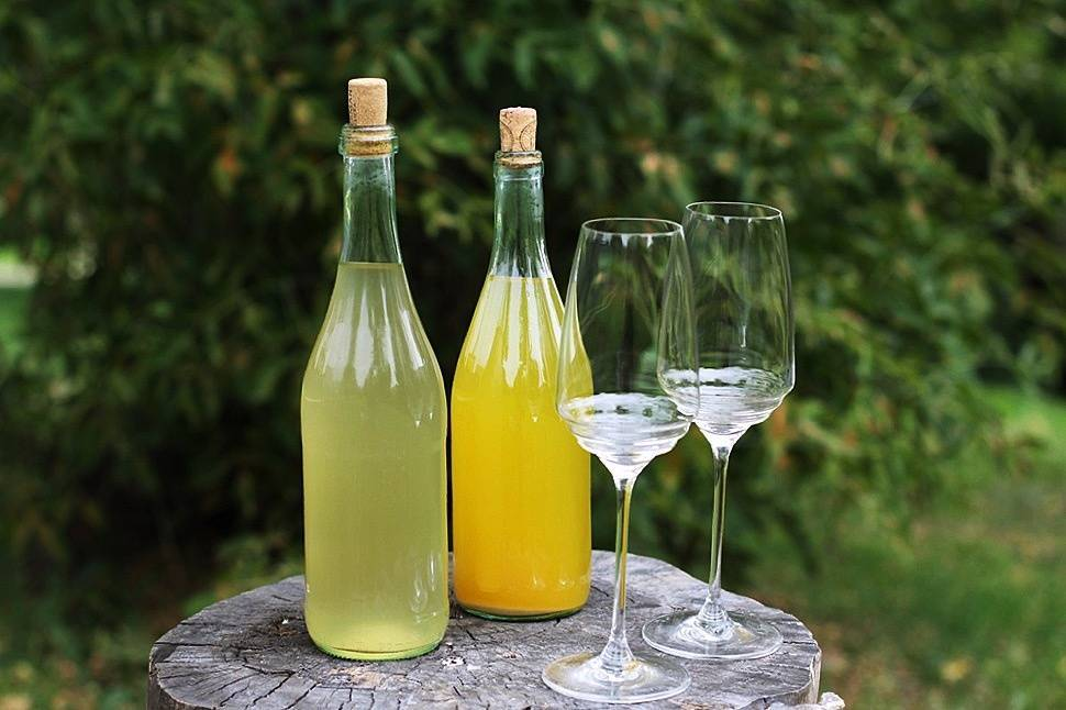 Вино из одуванчиков рецепт домашнего винодела