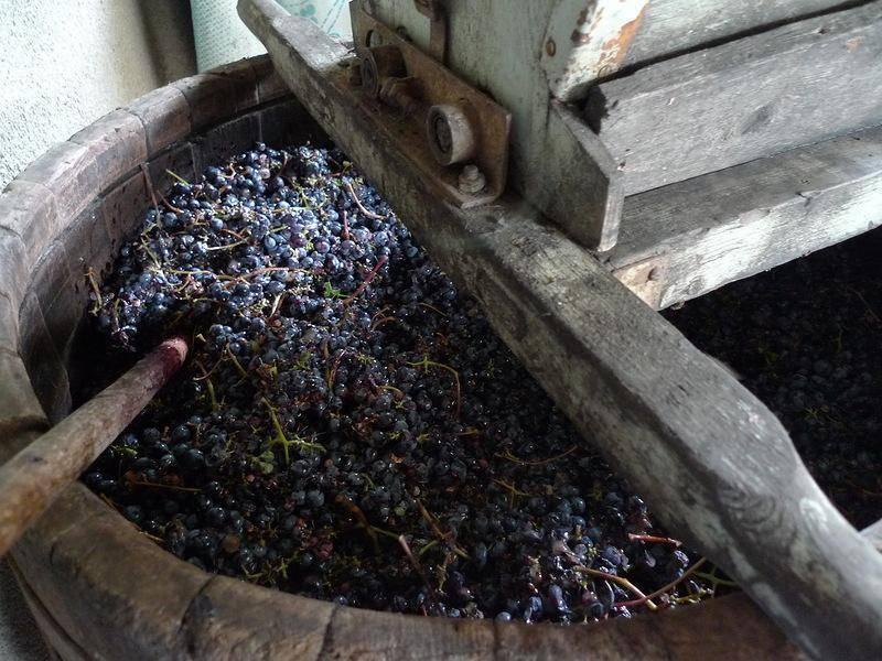 Нюансы и технология повторного использования виноградной мезги. что из нее можно приготовить?
