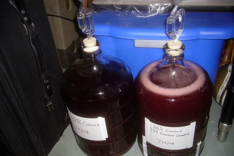 Структура рынка вина и перспективы развития виноделия