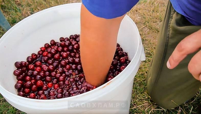 Как приготовить домашнее вино, настойку, наливку и ликер из вишни – 17 рецептов