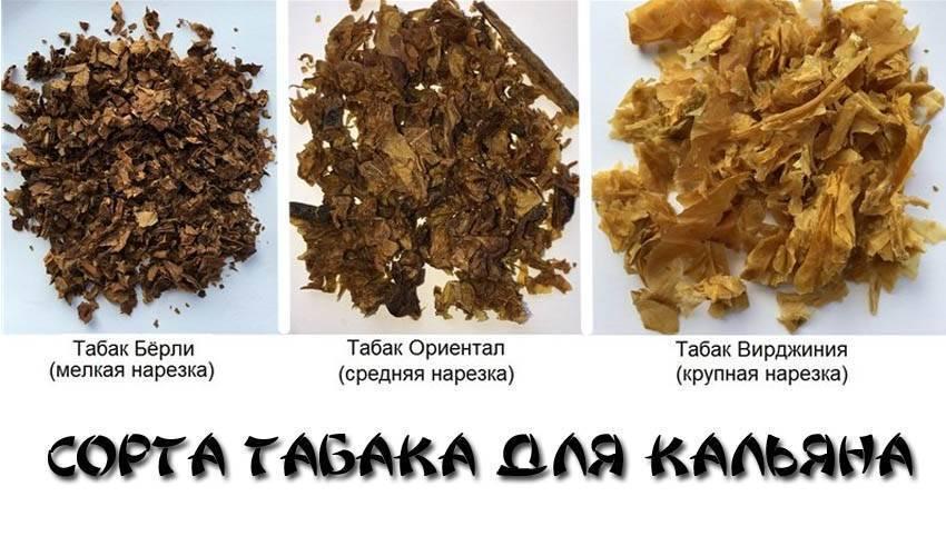 Вреден ли кальян без никотина — правдивый ответ