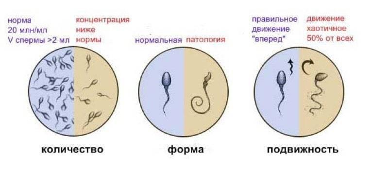 Влияние алкоголя на показатели спермограммы: объем и период разжижения