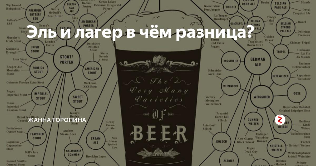 Стаут лагер эль. в чём разница между элем и лагером? иерархия пива и классификации