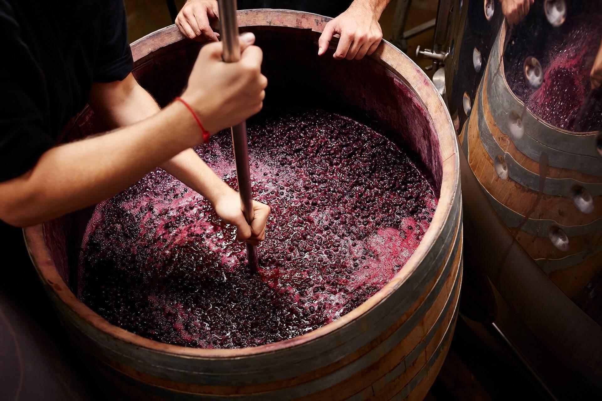 Чача из винограда в домашних условиях, простой рецепт