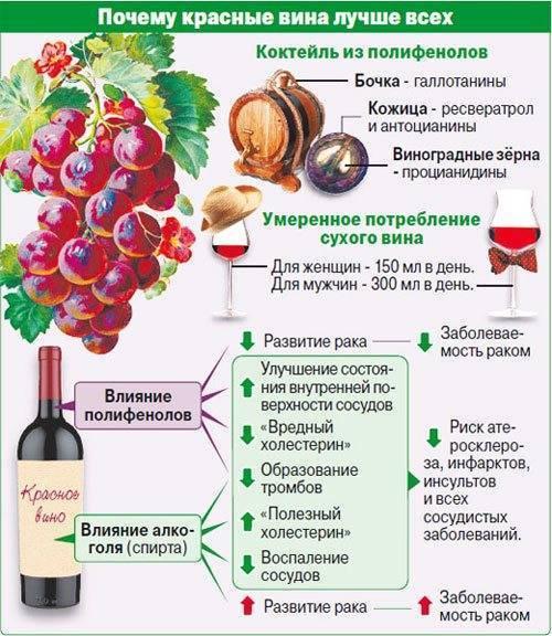 Калорийность сухого вина – сколько калорий на 100 грамм и в бокале