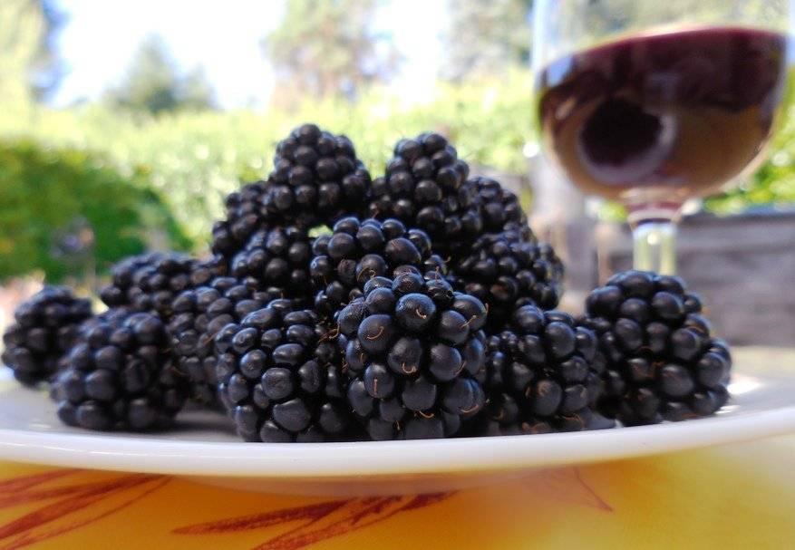 Рецепт вина из ежевики в домашних условиях (видео)