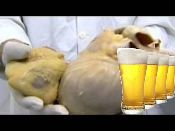 Пиво каждый день пить - что будет, влияние напитка на организм | prof-medstail.ru
