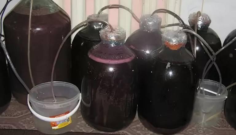 Брага из слив: 3 рецепта сливовой браги в домашних условиях