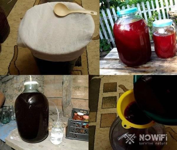 Рецепты домашних вин из черной и красной смородины