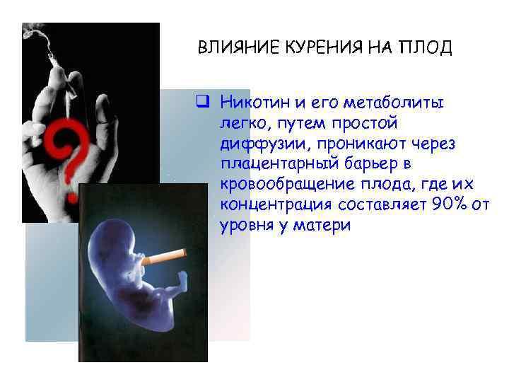 Почему не приживаются эмбрионы в матке после переноса в эко