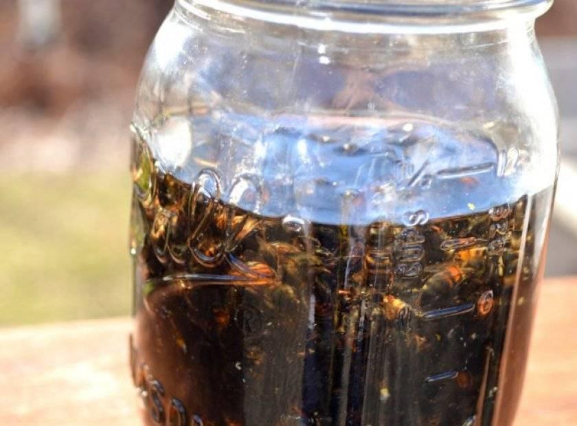 Как принимать настойку из пчелиного подмора на водке, польза настойки