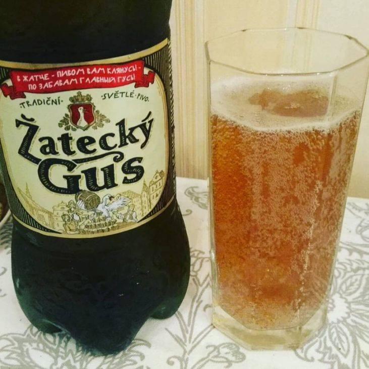Пиво жатецкий гусь