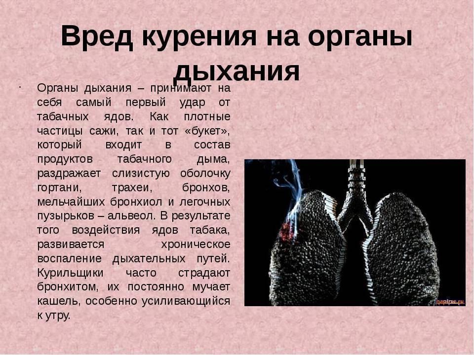 Влияние курения на здоровье: факторы риска для организма курильщика