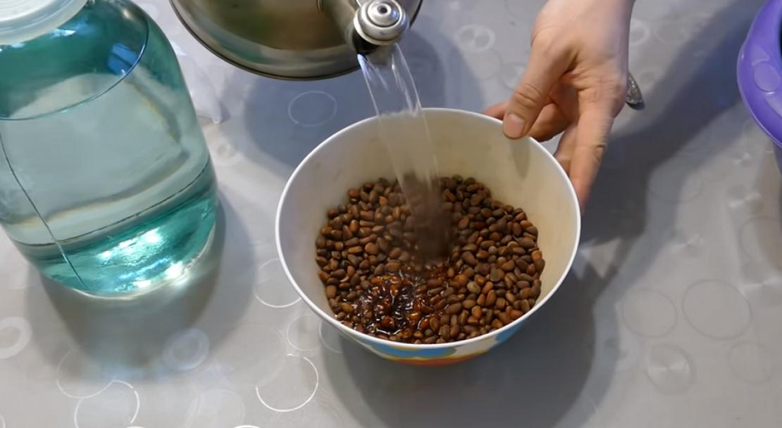 Делаем дома самогон на кедровых орешках по простым рецептам