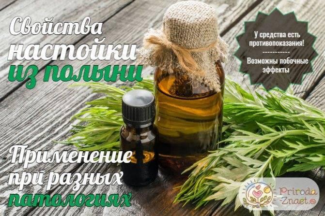 Полынь лечебные свойства, исследования пользы и вреда
