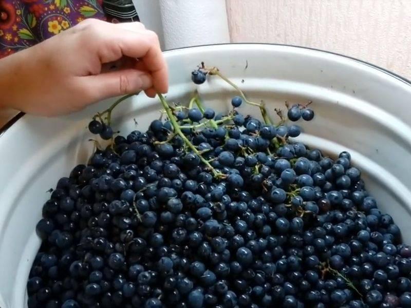 Домашнее вино из винограда: 14 простых рецептов с фото