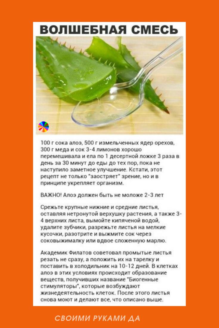 Лечебная настойка из алоэ, меда и кагора — рецепты и применение