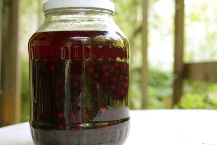Настойка из черемухи - вкусный алкоголь по простым и понятным рецептам