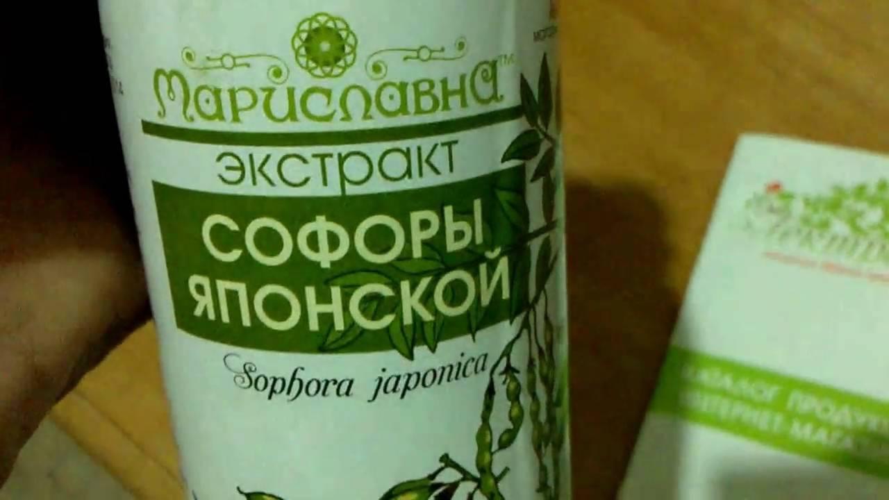 Софора японская - описание растения, лечебные свойства, показания к применению и рецепты народной медицины