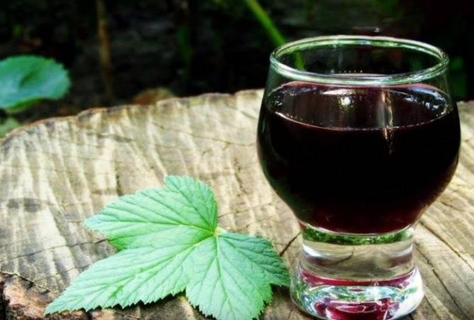 Настойка из черной смородины - рецепты на водке, на спирту и на самогоне