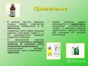 Ландыш майский – лечебные свойства и рецепты - народная медицина   природушка.ру
