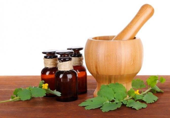 Цикорий – польза и вред для здоровья, описание и состав растения, противопоказания