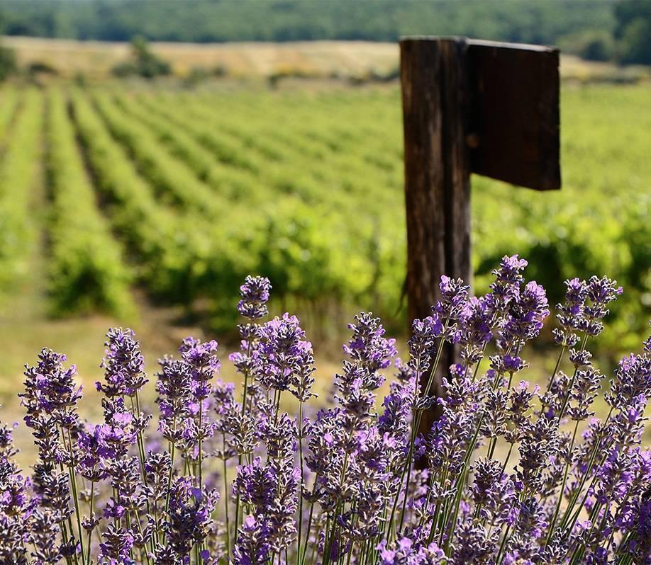 Розовые вина прованса: обзор, отзывы, характеристики, производство