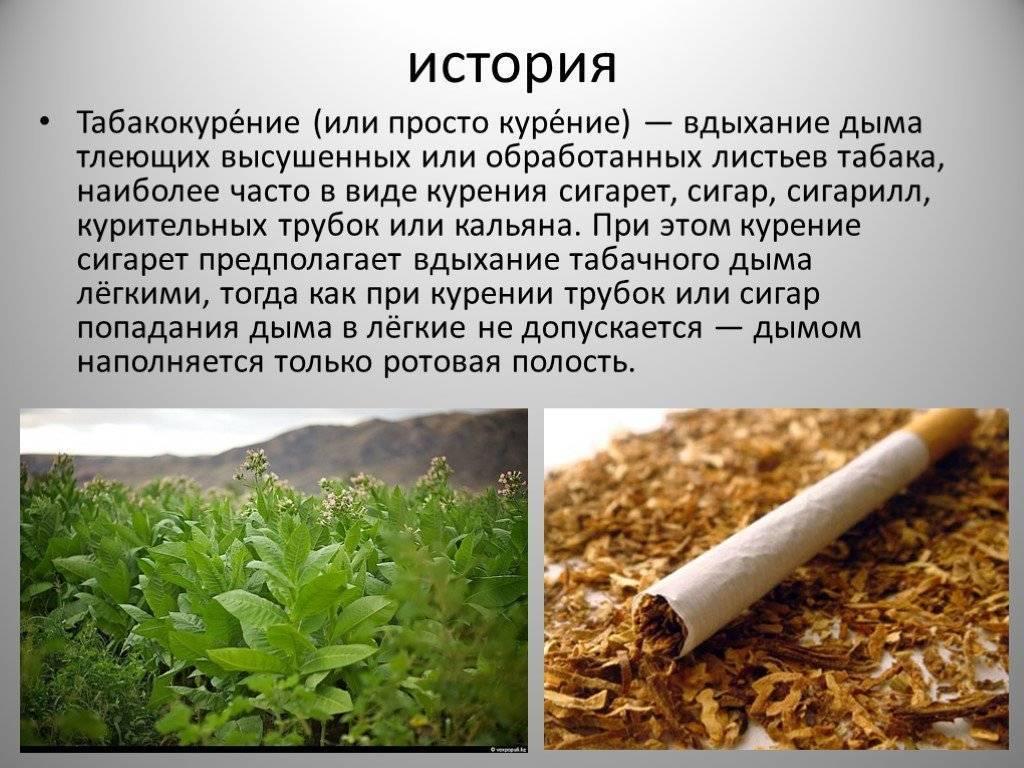 Происхождение табака. курение: тонкости, хитрости и секреты