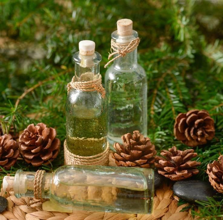 Настойка на водке с сосновыми шишками: лечебные свойства, противопоказания, применение