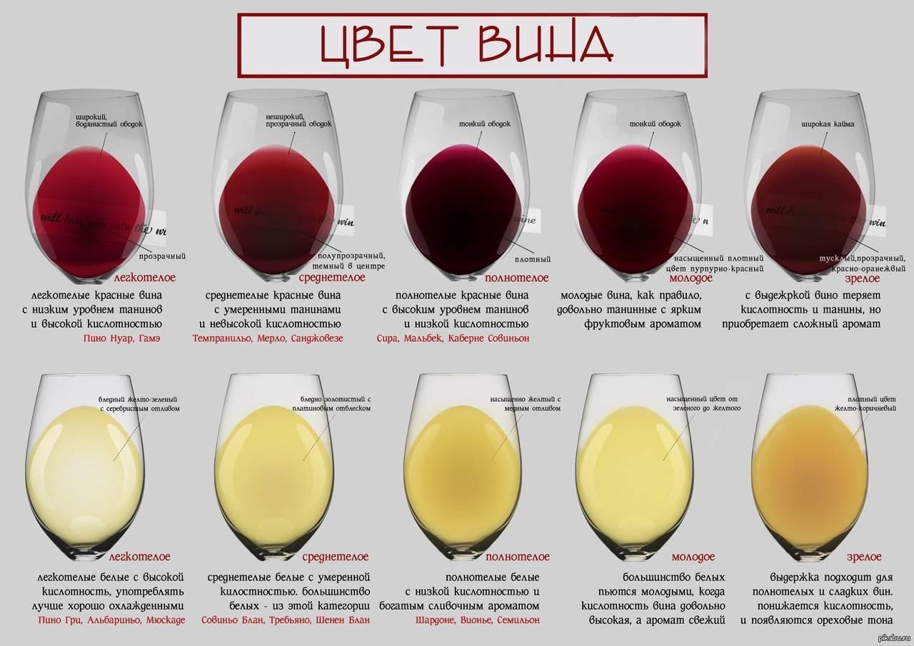 Чем отличается столовое вино от десертного