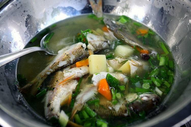 Рыбный суп уха из ершей рецепт с фото - 1000.menu