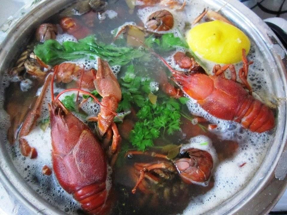 Как правильно варить раков — простой рецепт в домашних условиях. вкусные вареные раки с солью, укропом, в пиве. как и сколько варить живых, замороженных, речных раков?