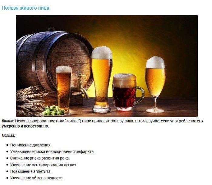 Интересные факты о пиве — музей фактов