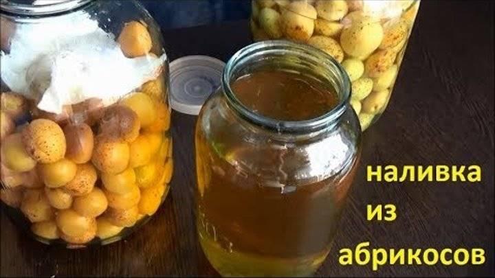Самогон из абрикосов — 6 лучших рецептов приготовления