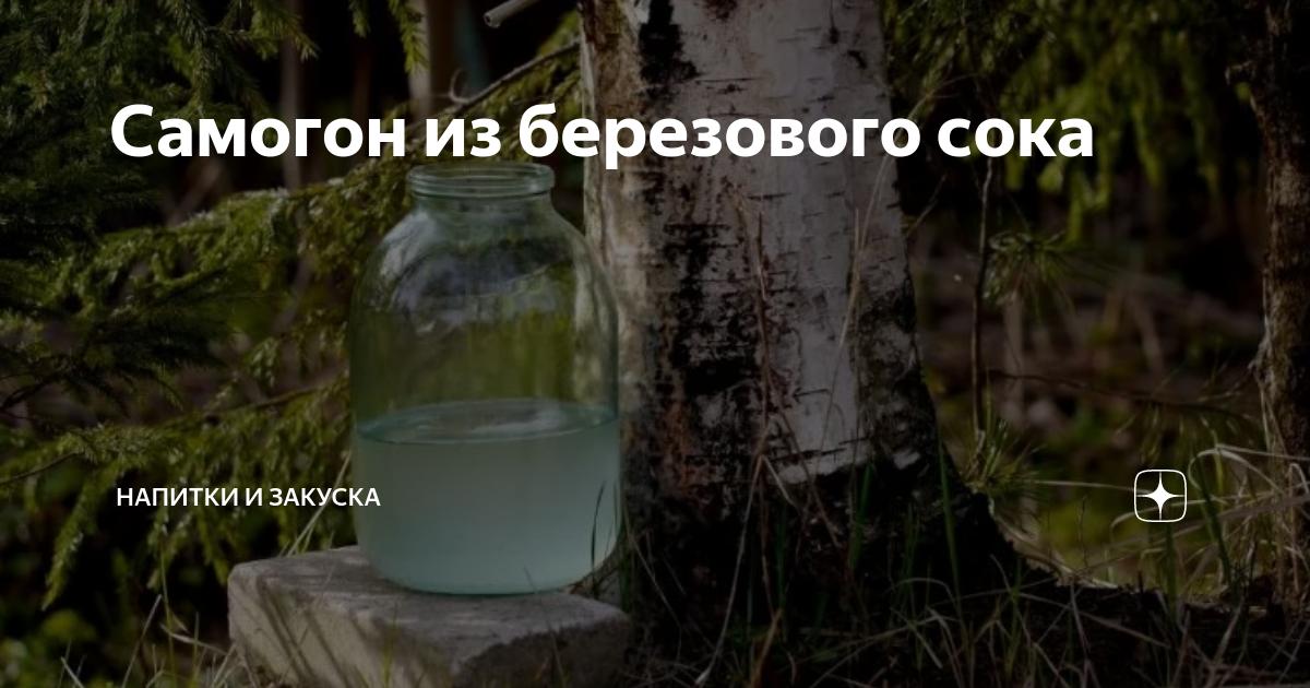 Самогон из березового сока: рецепт. технология, как сделать самогон на березовом соке.