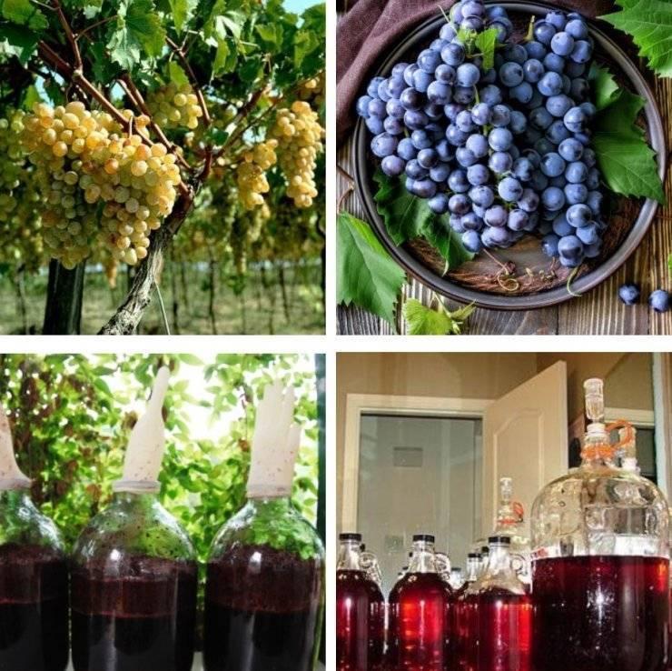 Производство вина: особенности технологического процесса и оборудование