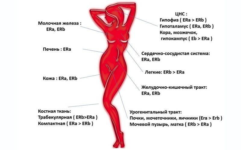 Содержатся ли в пиве женские гормоны?