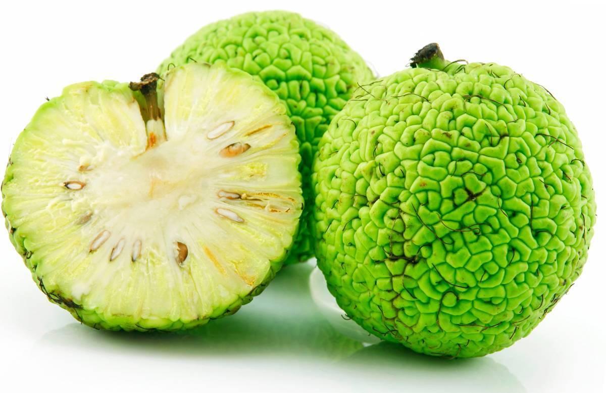 Настойка из адамова яблока для суставов: лечебные свойства, показания, рецепты