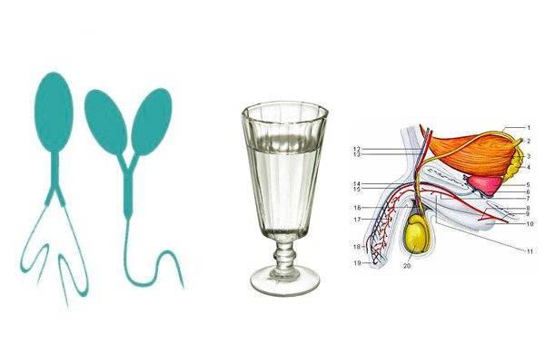 Зачатие и алкоголь: влияние алкоголя на качество спермы