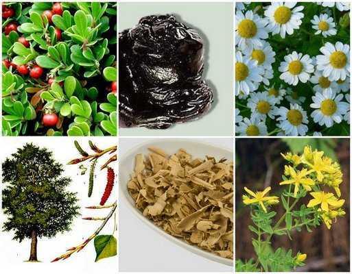 Природа в помощь. толокнянка – растение от алкоголизма в народной медицине