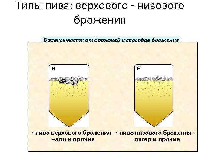 Сколько бродит домашнее пиво?, рассмотрим процесс брожения пива