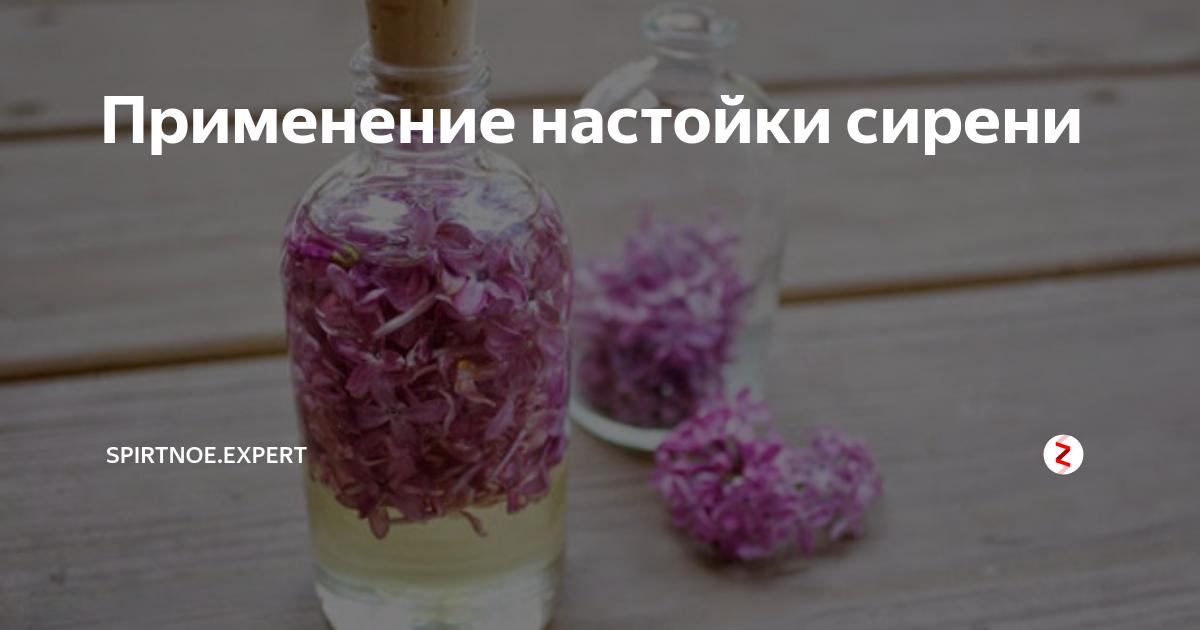 Сирень: польза и вред, лечебные свойства, применение настойки, отзывы