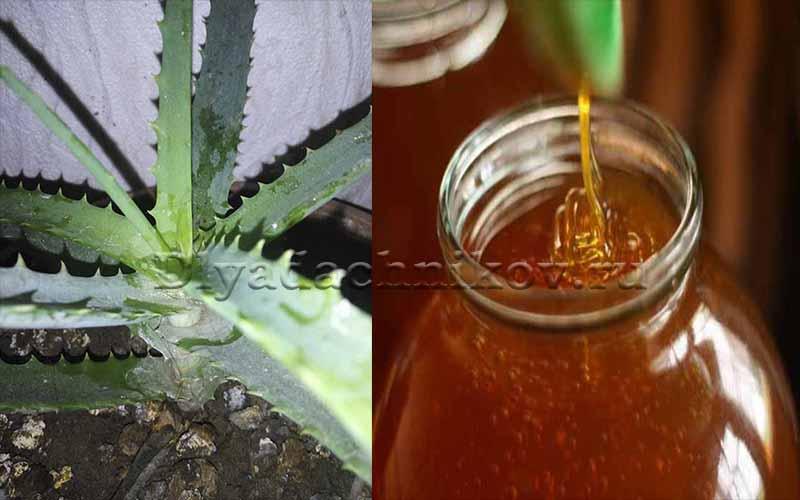 Настойка алоэ на водке: применение, рецепты и полезные свойства