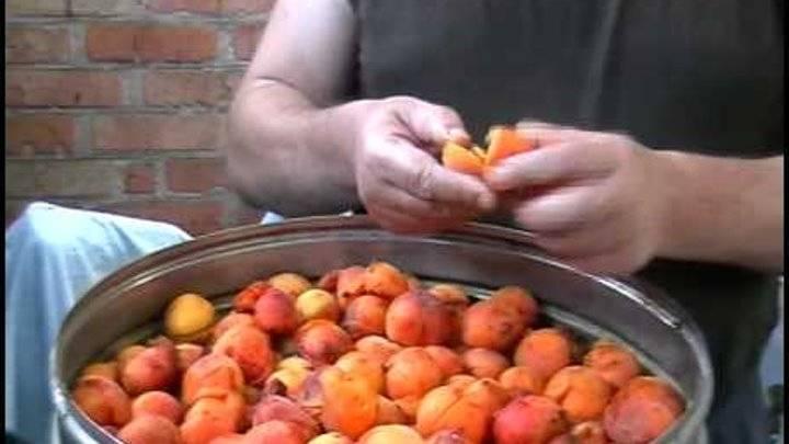 Варианты приготовления браги из абрикосов