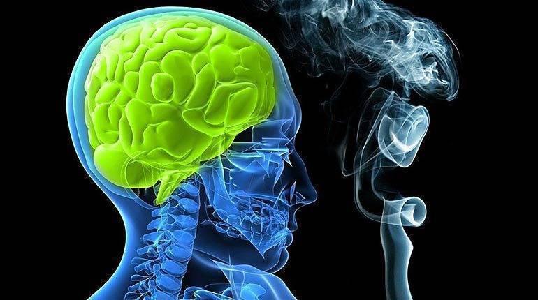 Влияние курения на мозговую деятельность. как влияют сигареты на мозг человека. восстановление головного мозга после курения