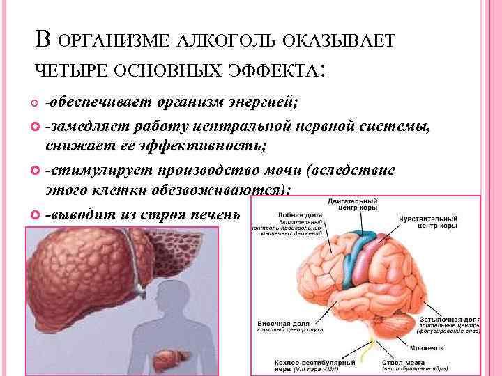 Замедленный метаболизм: как ускорить обмен веществ - allslim.ru