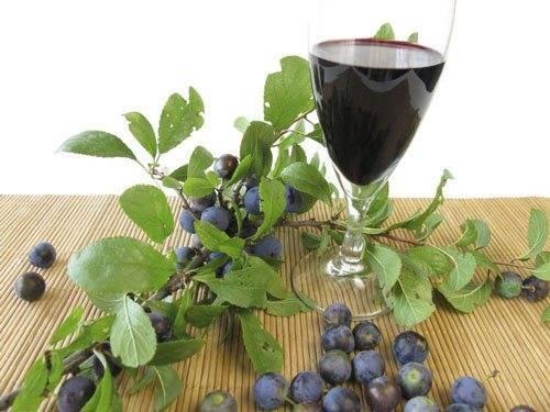 Вино из тернослива в домашних условиях
