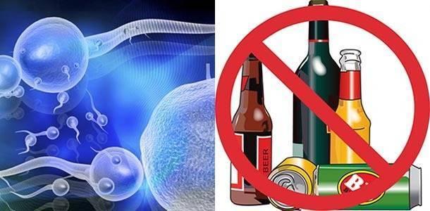 Влияние алкоголя на сперму: вязкость и подвижность семенной жидкости. почему алкоголь убивает вашу сперму и другие факты о мужской фертильности