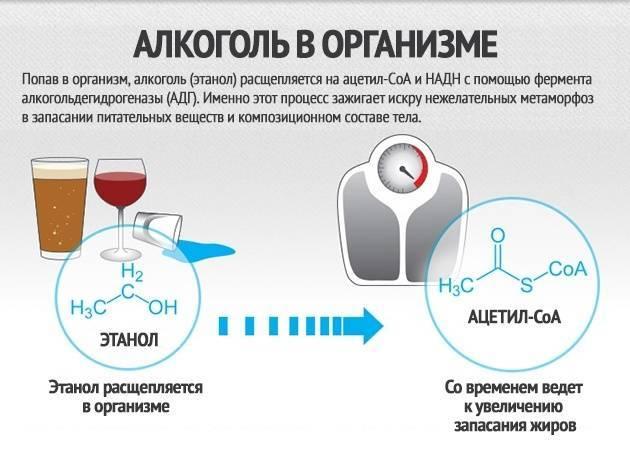 Как алкоголь влияет на рост мышц и замедляет ли он метаболизм