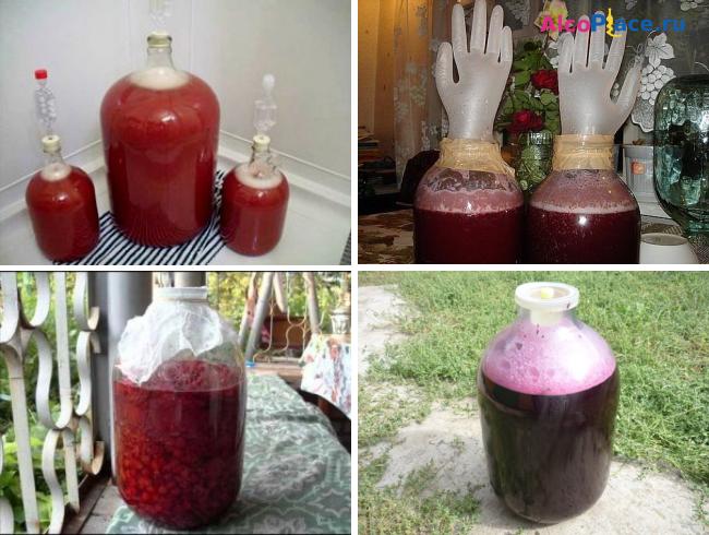 Простой рецепт вина из калины в домашних условиях